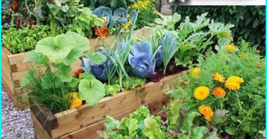 สวนกรวดด้วยมือของเขาเอง - วิธีการที่คุณสามารถใช้กรวดในสวน