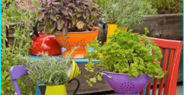 10 สุดยอดพืชสำหรับเตียงอาบแดด - ที่จะนั่งบนด้านที่แดดส่อง?