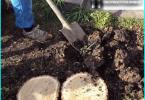 ประเภทของต้นสน: พันธุ์ที่ดีที่สุดสำหรับการเจริญเติบโตไม้ประดับในสวน