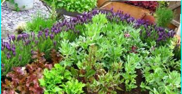 วิธีการทำสวนในขวด: เจ้านายชั้นสูงใน florariuma อุปกรณ์
